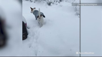 Puppy has no idea what to do with the snow