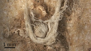 50,000-Year-Old String Shows Neanderthals Smarter Than We Thought