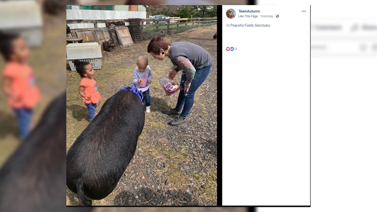2-year-old with cancer who loves pigs meets one for the first time