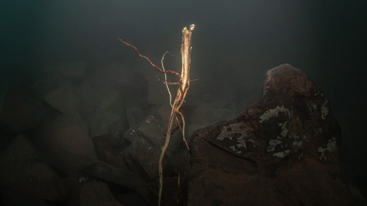 """The roots of the cedar trees that were so prominent on the """"sea stack"""" can be seen in its rubble."""