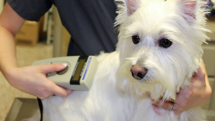 Get your pets microchipped for just $15 in Hudsonville Oct. 7