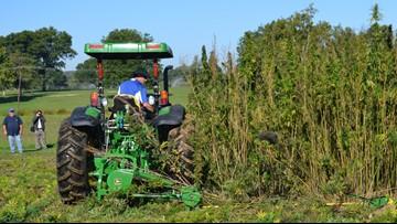 Michigan launches pilot program for farmers to grow hemp
