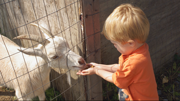 Petting zoo pitfalls: Keep the germs from coming home with you