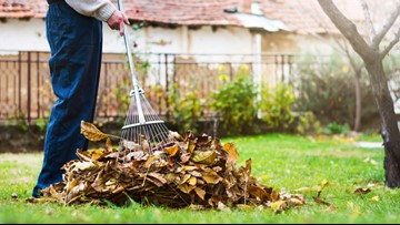 Skip the raking — mulch your leaves instead