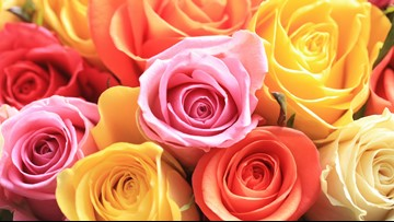 The meaning behind each color of roses