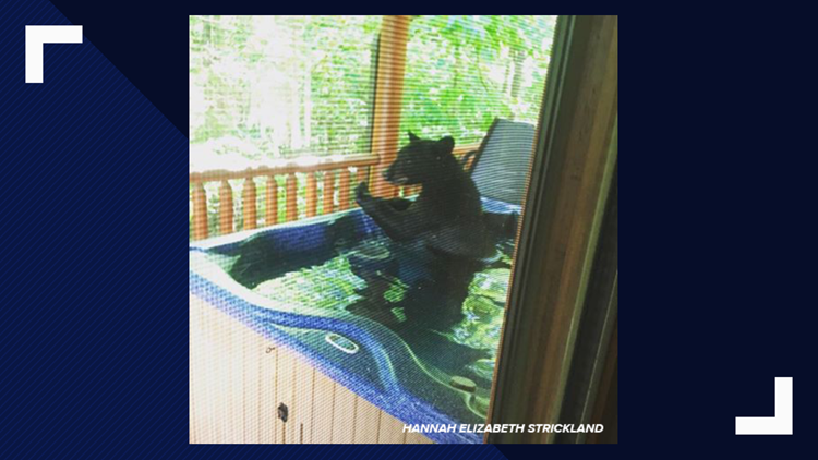 BEAR CLIMBS INTO GATLINBURG HOTEL