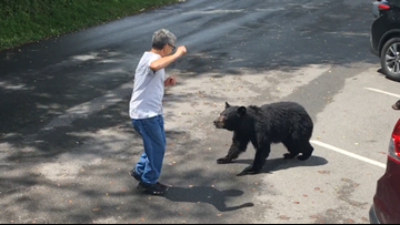 WATCH: Tennessee park visitor confronted a momma bear and her cubs, so she charged