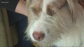 Doctors in North Carolina save dog using 3D printed implant