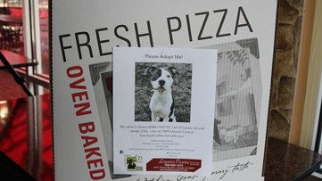 This North Carolina pizza shop is putting photos of adoptable dogs on their pizza boxes