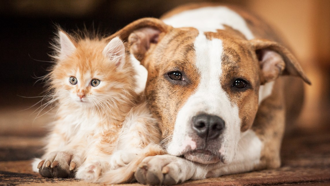 These tips could save your pet in the event of a fire