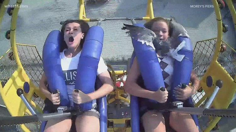 WATCH: Seagull hits teen in the face while she's on SpringShot ride at amusement park