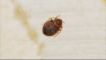 Grand Rapids ranks among top 20 cities for bed bugs