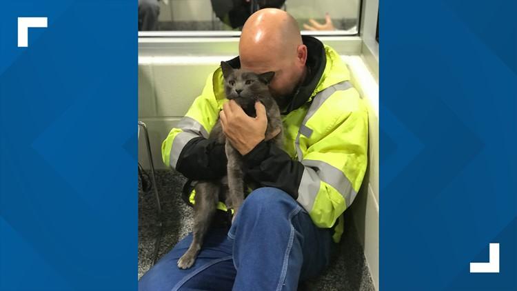 Cat owner reunited