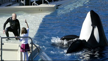 SeaWorld Orlando changing its centerpiece killer-whale show