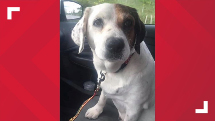 Journey rescued from euthanasia in Virginia