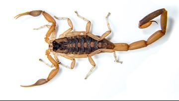 United Airlines scorpion sting sends Atlanta-bound passenger to hospital