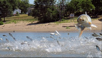 States, provinces OK plan to protect Great Lakes from carp