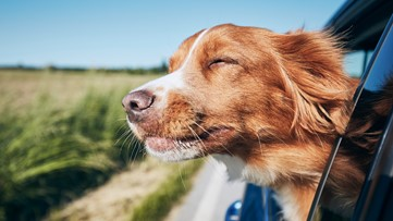 Georgetown Animal Hospital share tips on how to best care for your pet