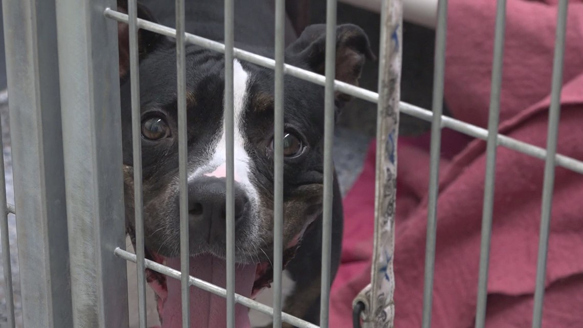 Michigan shelters join program to help animals in cruelty, disaster situations
