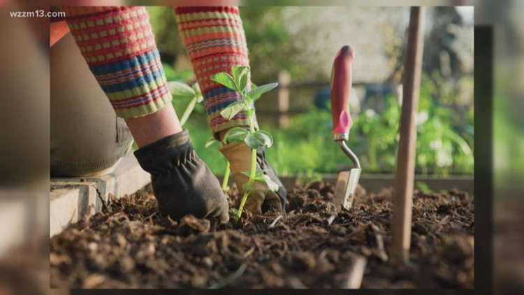 Changes coming to your fall garden