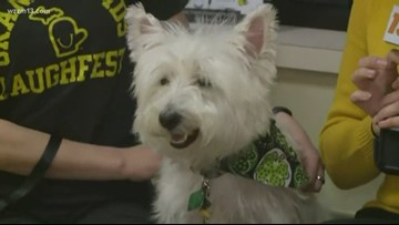 LaughFest hosting event specifically for dog lovers