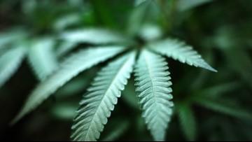 Michigan House: Label marijuana as risk to pregnant women