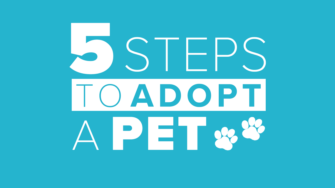 5 Steps To Adopt A Pet