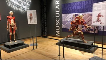 Tickets sell out for opening day of Bodies Revealed exhibit at museum