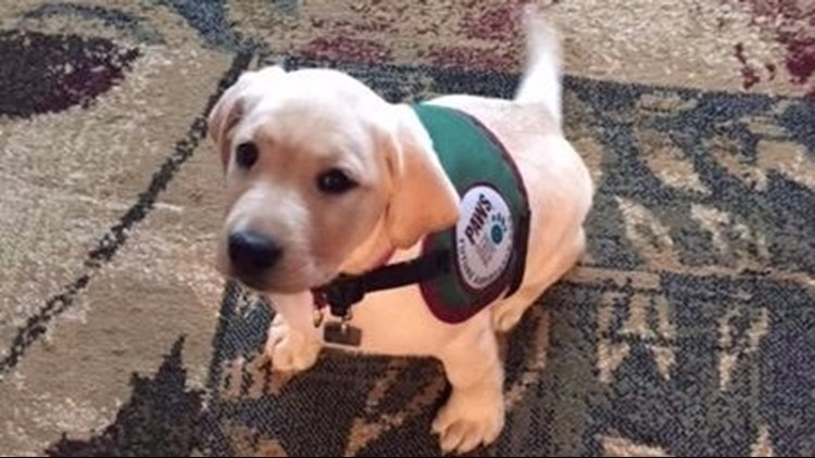 CJ: First few days with the WZZM 13 Paws with a Cause puppy