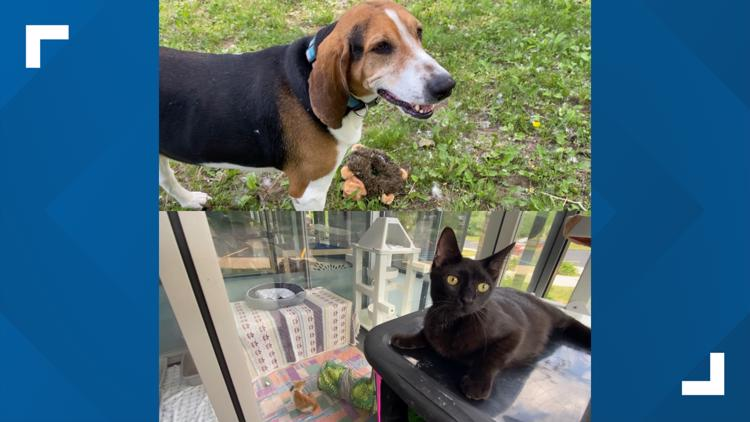 Adopt-a-pet: Meet Bubba & Luna at the Humane Society of West Michigan