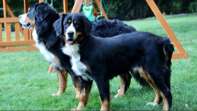 Grand Haven Puppy Mill Rescue