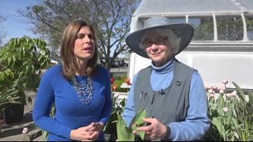 Gardening Week - Tulip tutorial