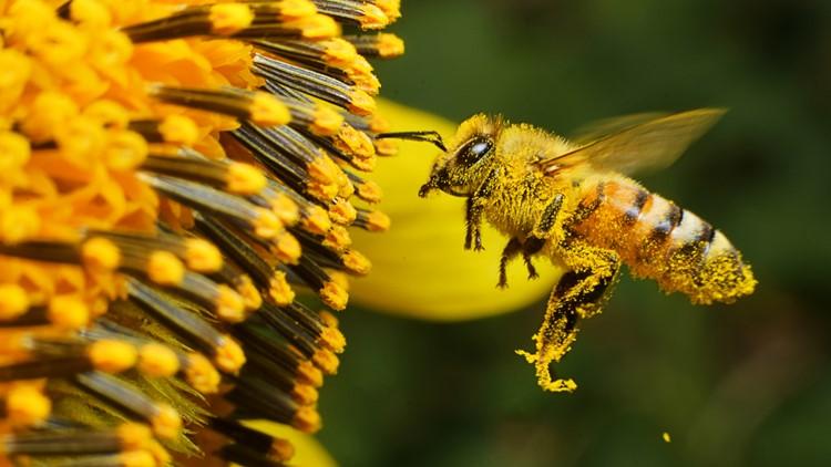 Honey, I'm home! John Ball Zoo has new bee hive exhibit   wzzm13 com