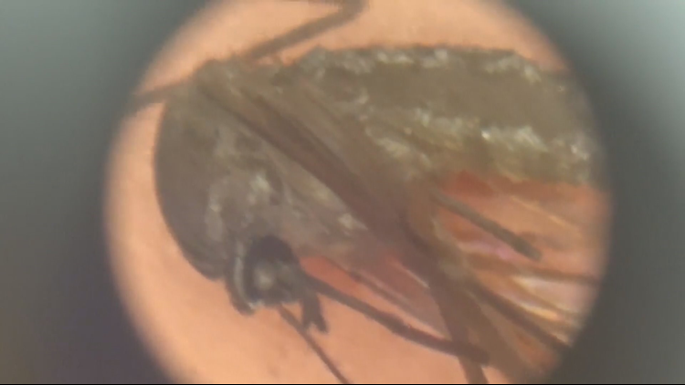 More counties added to mosquito warnings