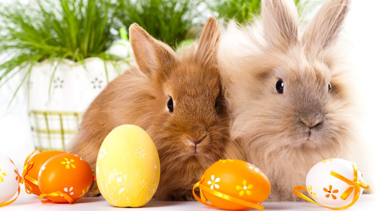 Know what to expect before deciding to bring a bunny into your home