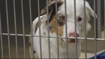 Kent Co. Animal Shelter is overflowing due to high intake numbers coupled with lower euthanasia rate