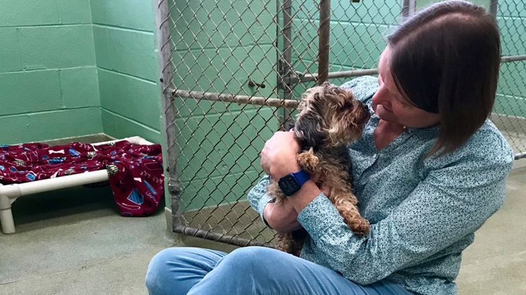 Dog found in Michigan, reunited with Florida owner, 7 years after being stolen