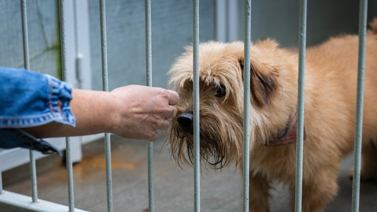 Displaced Hurricane Laura animals up for adoption in West Michigan Empty the Shelters event