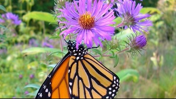 Celebrate the release of monarch butterflies for Monarch Day at John Ball Zoo