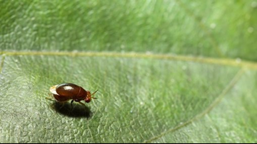 Summer has arrived, and so have your garden pests