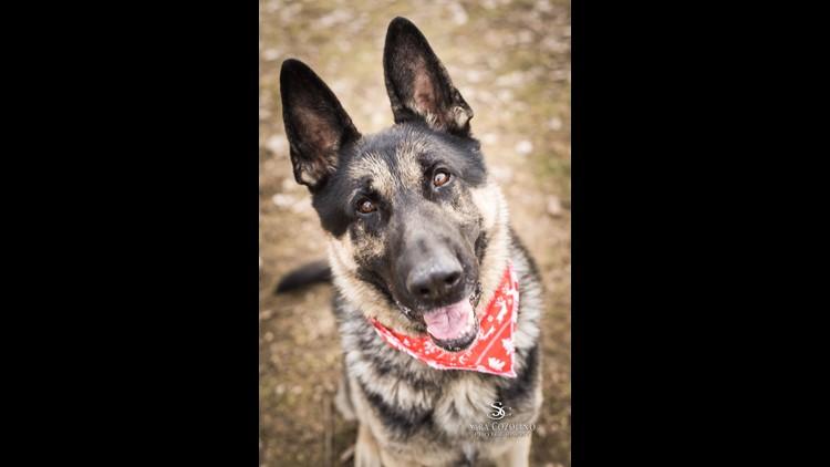 Adopt-A-Pet: Meet Indy & Winston!