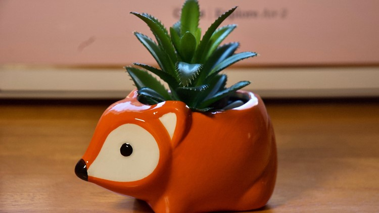 Succulent in a hedgehog
