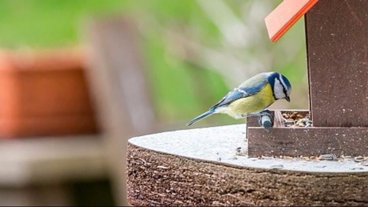 Gov. Whitmer vetoes bill to ease restrictions on feeding birds