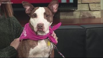 Adopt-A-Pet: Meet Fifi!