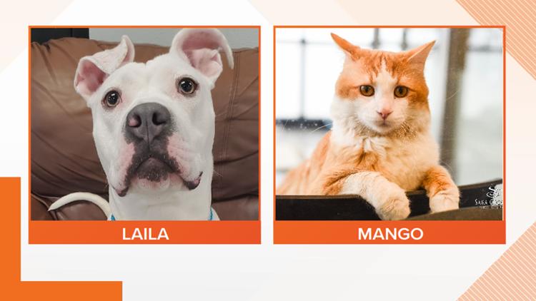 Adopt-A-Pet: Meet Laila and Mango!