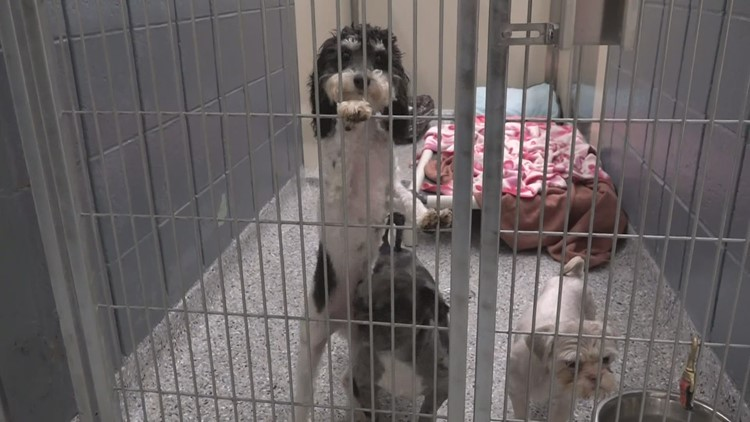Dogs rescued from a puppy mill given a second chance at life