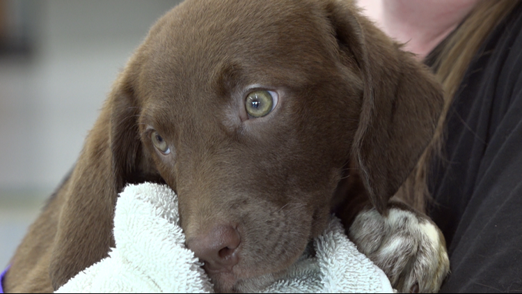 Litter of puppies moved from high-risk shelter find forever homes in Michigan