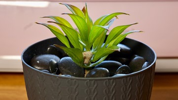 Bring a splash of green into your home with mock succulents
