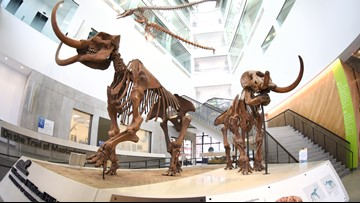 U. of Michigan natural history museum reopening to public