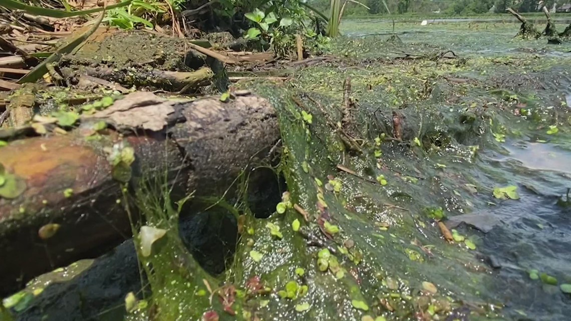 Algae issues in Ottawa County